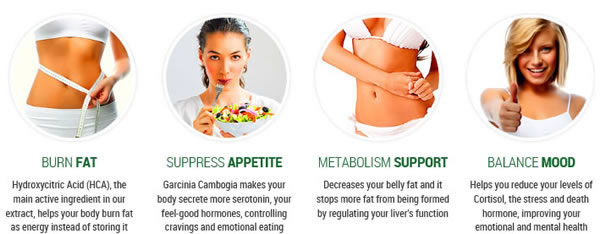 How garcinia cambogia works
